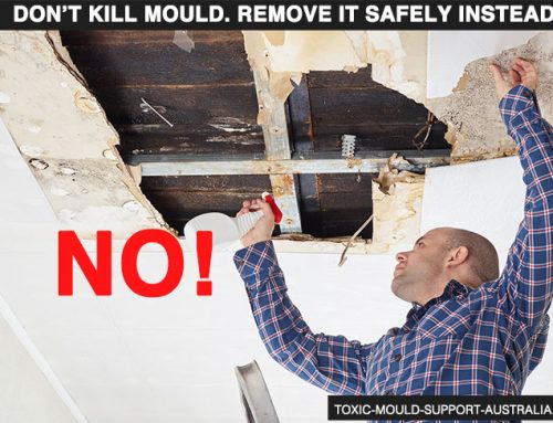 Remove, Don't Kill Mould – Part 1 – Building Materials